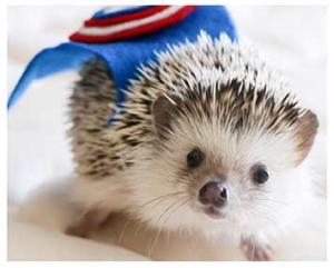 Hedgehog superhero