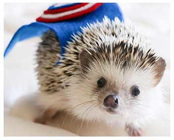 The Facebook Advertising Services Hedgehog