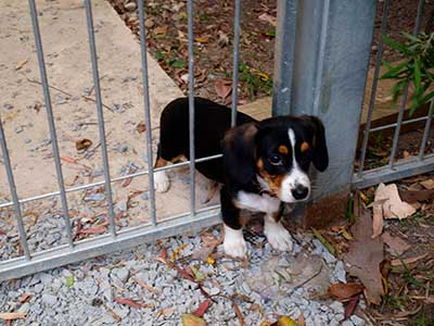 Puppy stuck in a gate (her Google Ads account is getting her down.)