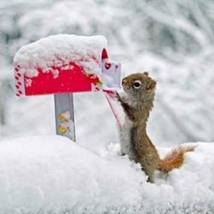 cold squirrel getting the mail